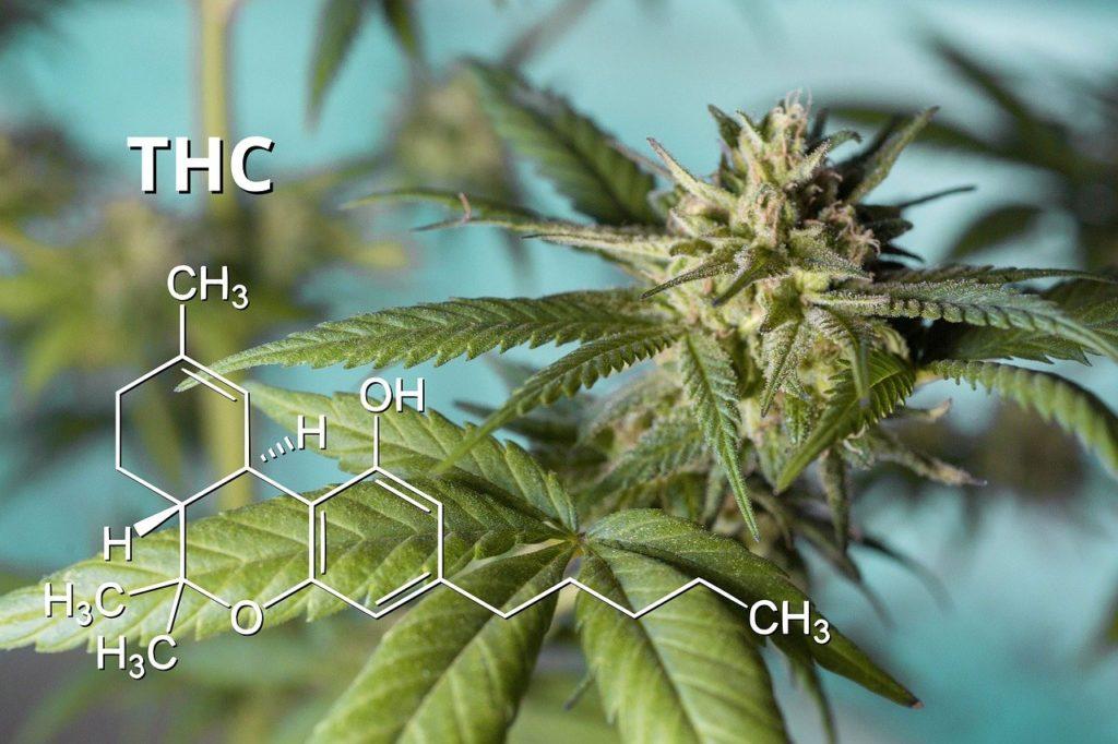 Cannabis Medizin